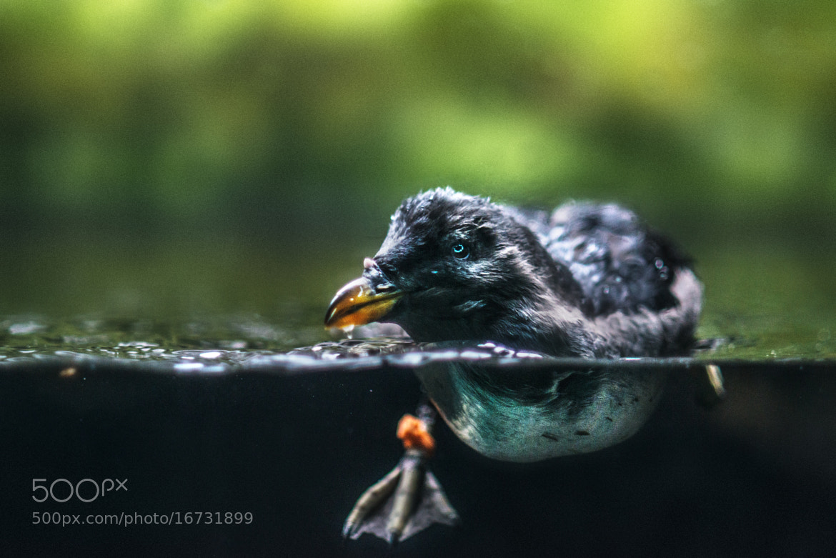 Photograph Out for a swim by Mukul Soman on 500px