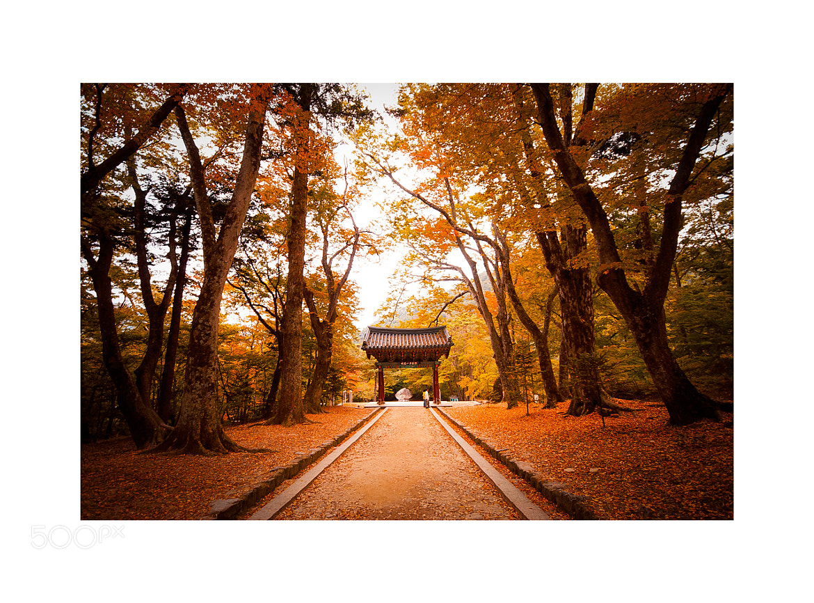 Photograph autumn by photographer photopia on 500px