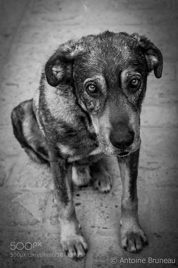 A Stray Dog Named 'Lucky'
