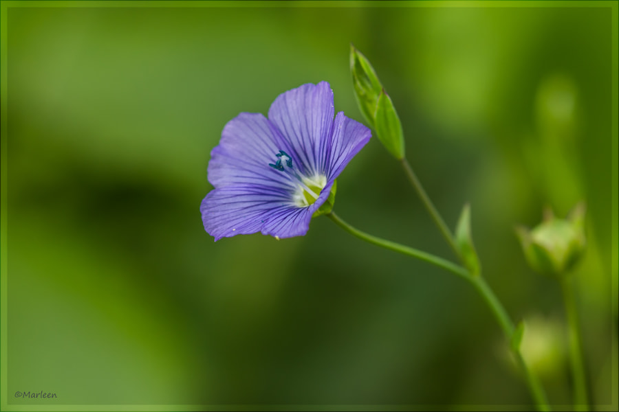Photograph flower  by marleen aerts on 500px