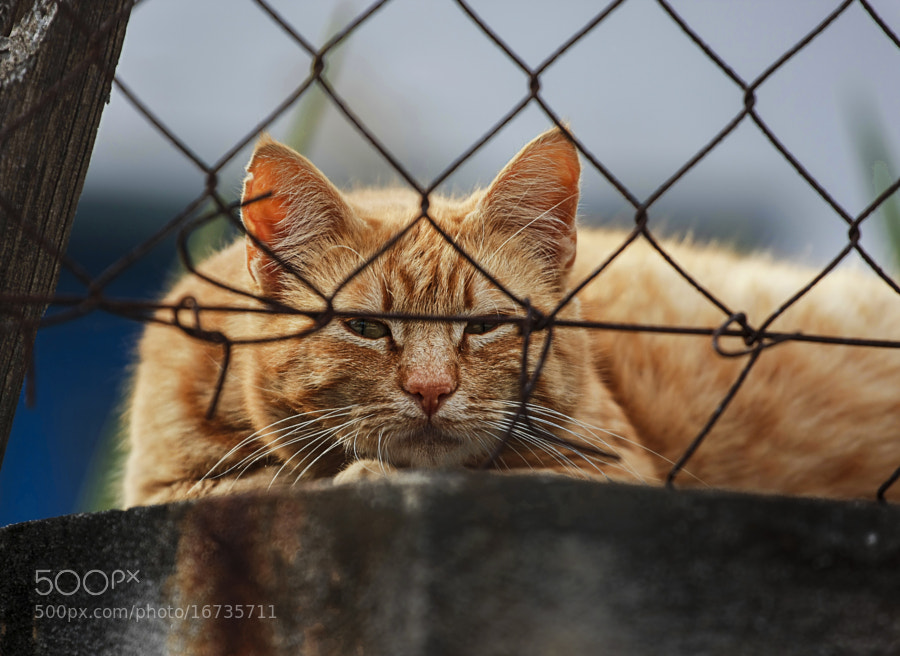 Photograph A Stray Cat. by Yannis Karantonis on 500px