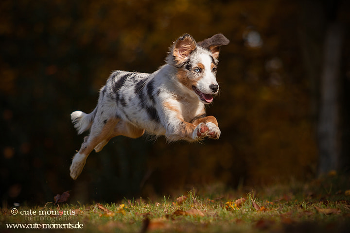 Photograph i can fly by Jessica Lipki on 500px