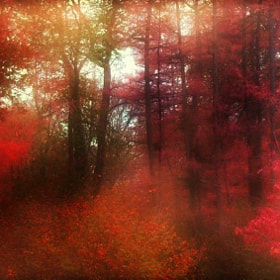 Enchanted Forest by Delphine Devos (Delphine)) on 500px.com