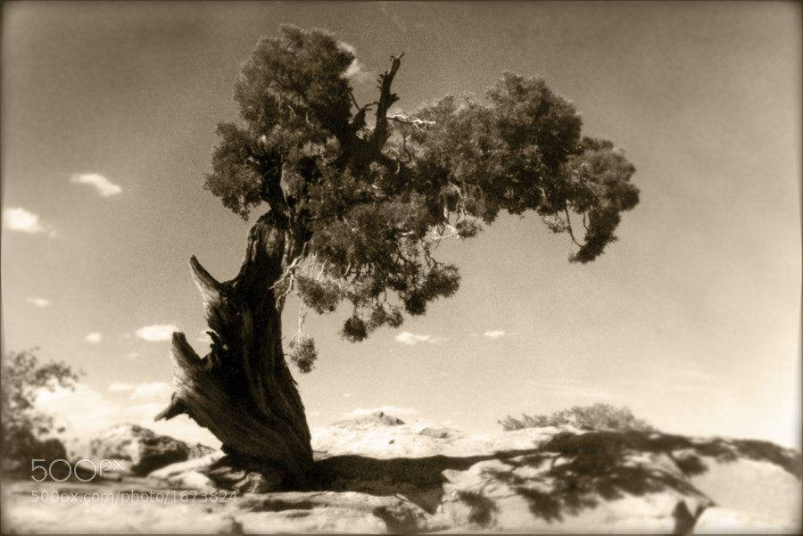 This lonely wind-swept tree was shot in Canyonlands State Park in southern Utah.  You can purchase this print here:  http://fineartamerica.com/featured/wind-swept-tree-scott-norris.html.