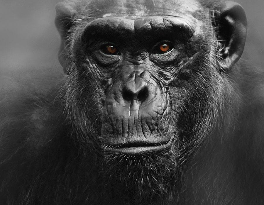Photograph primates by Prachit Punyapor on 500px