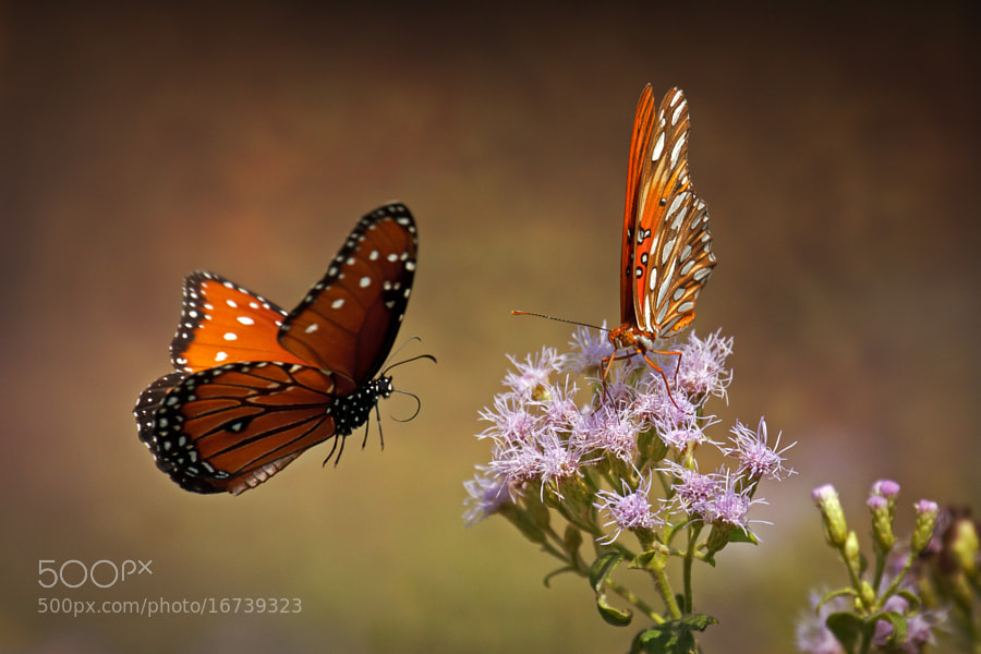 Butterflies by Kenny Salazar (kennysalazar)) on 500px.com