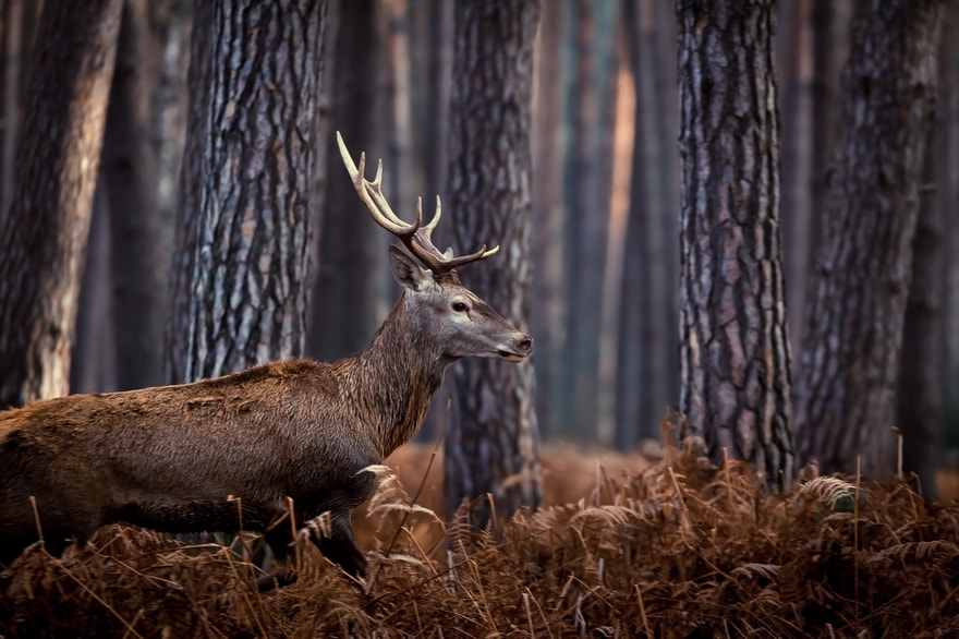 Photograph I see you...you don't see me by Nicolas Le Boulanger on 500px