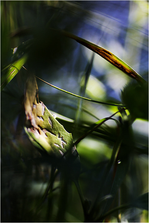 Photograph IN THE JUNGLE by Tom Karola on 500px