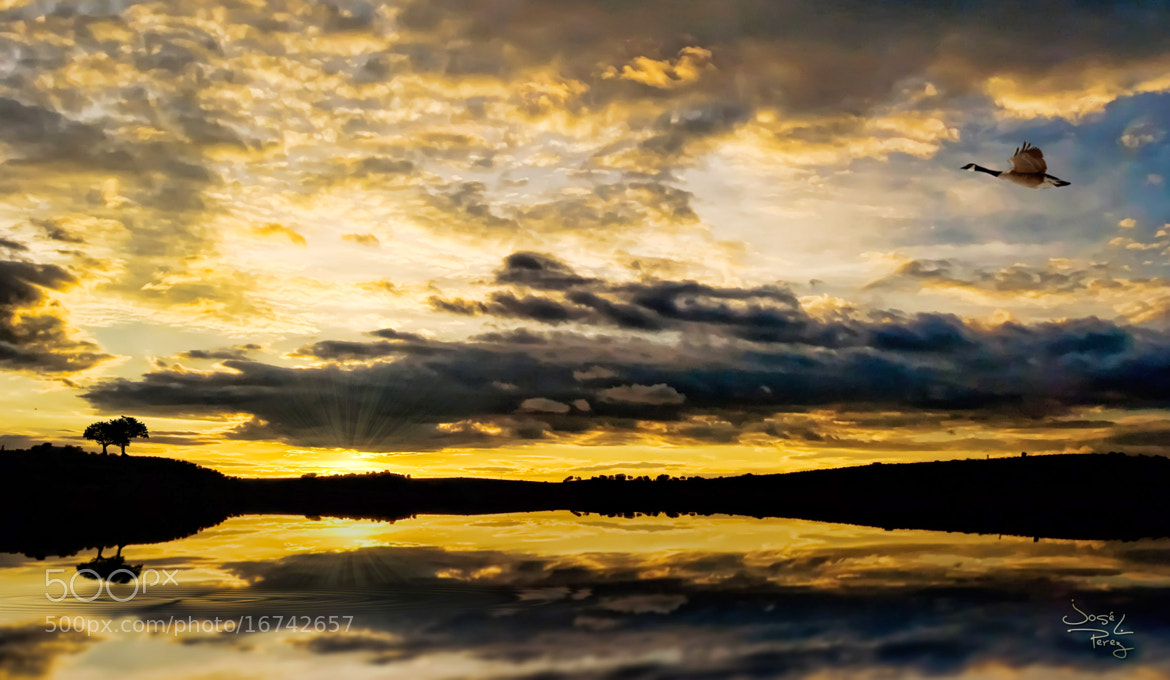 Photograph Flying at sunset by Jose Luis Perez on 500px