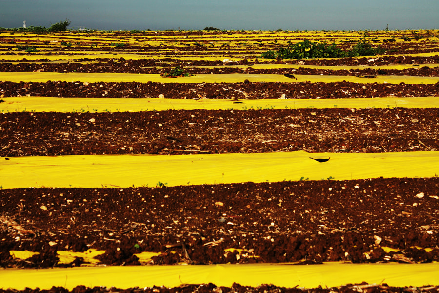 Photograph Hate yellow by Haggai Ben-Yehuda on 500px