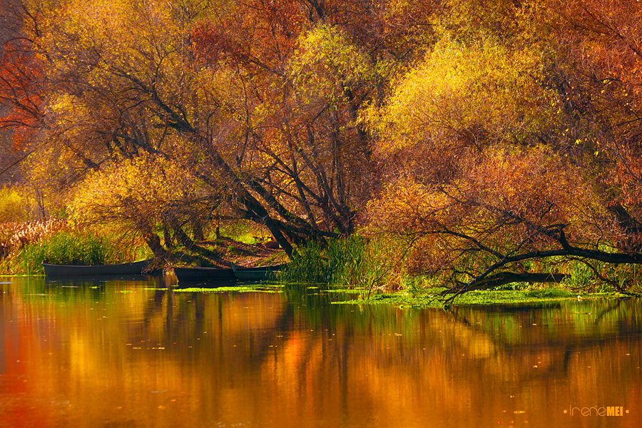 Photograph Last Colours of Autumn by Irene Mei on 500px
