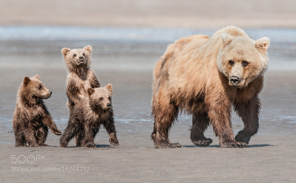Photograph Mom taking the kids for a stroll by Ursula Dubrick on 500px