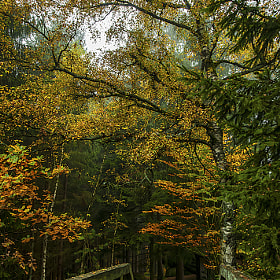 Herbstwald by Leo Pöcksteiner (Poecky23)) on 500px.com