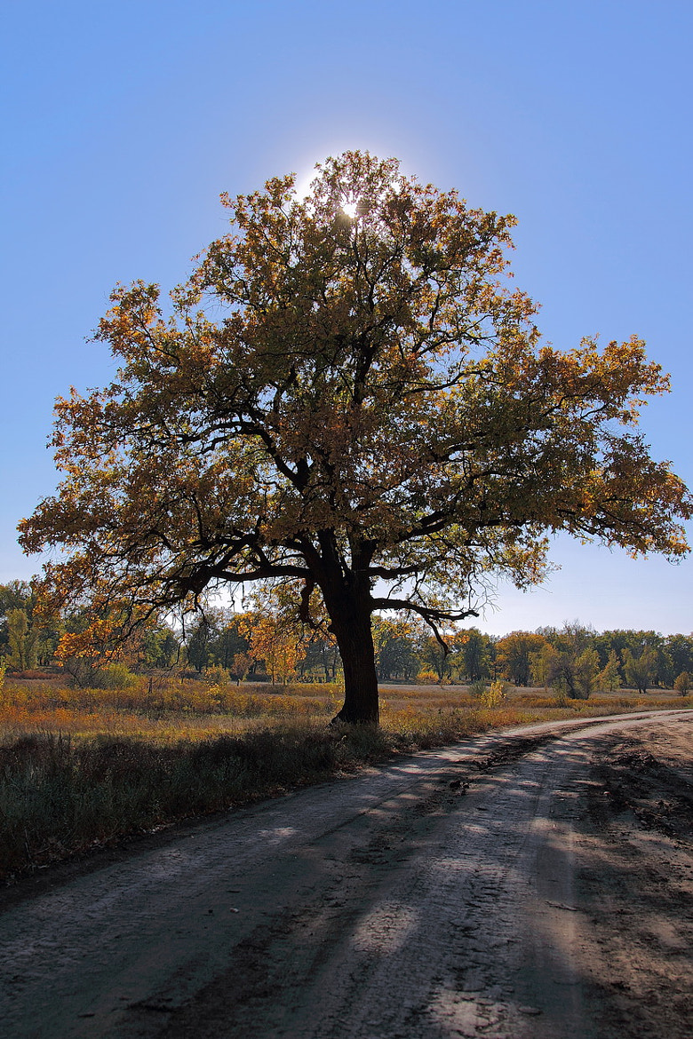 Photograph Light oak by Andrey Erofeev on 500px