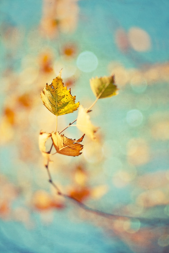 Photograph november wind. expression by Yulia Pletinka on 500px