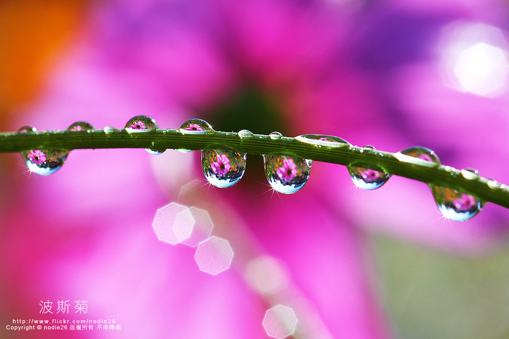 Photograph drop by Nodie Yang on 500px