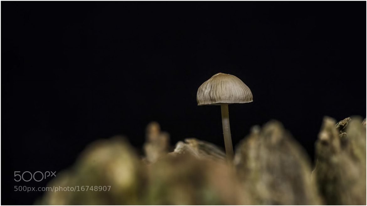 Photograph Forest Fungi by allan squires on 500px