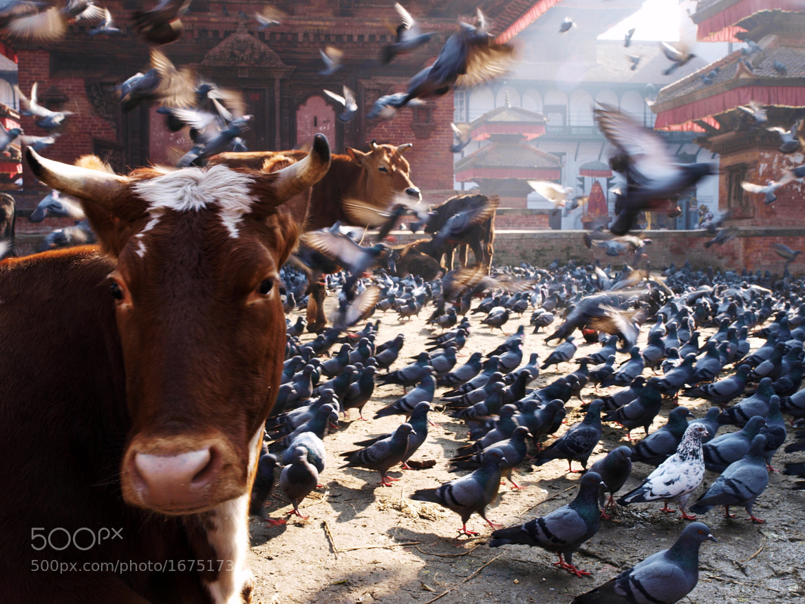 Photograph Living in Harmony by vytautas ambrazas on 500px