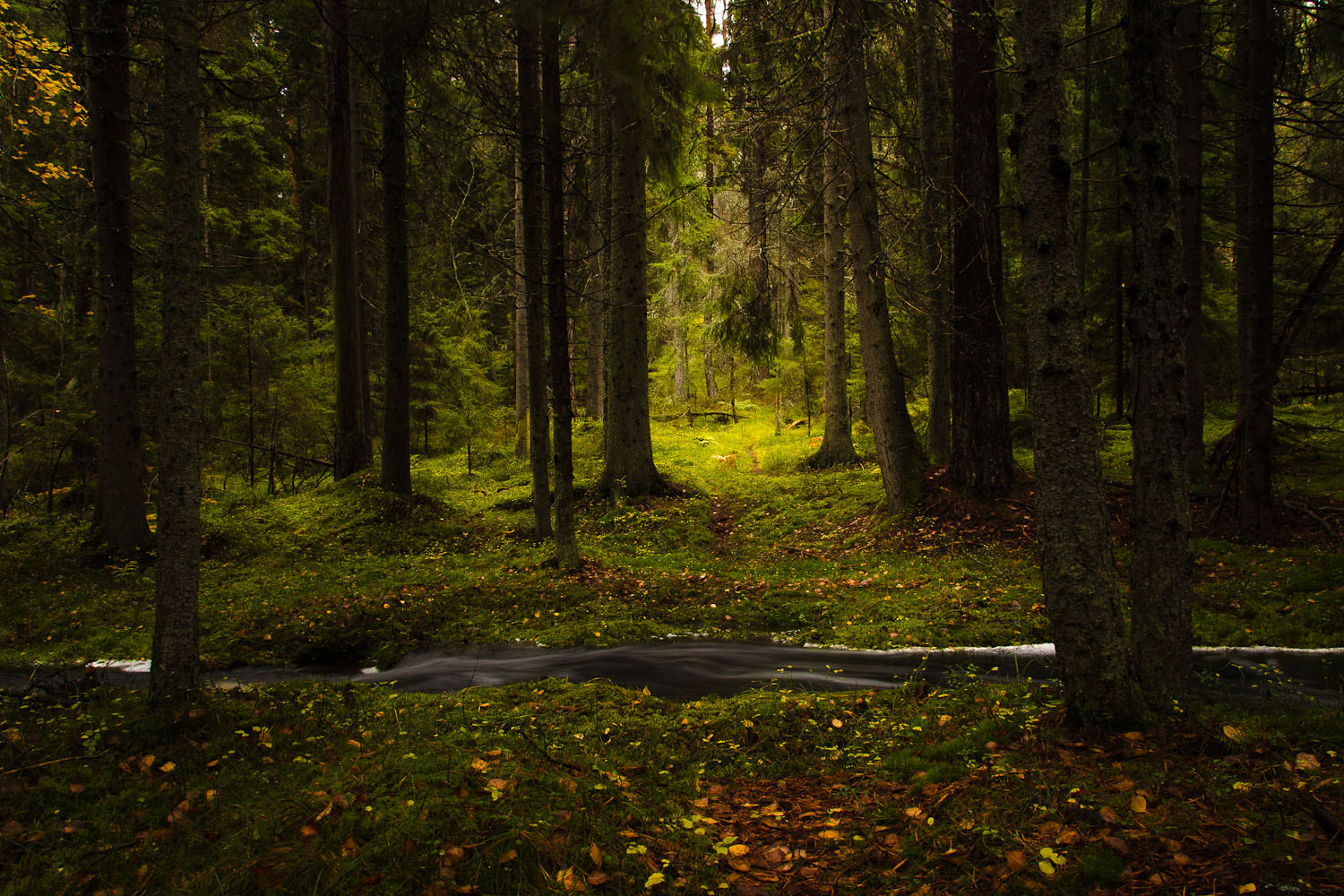 Photograph A light place in the forest by Ulf Bjolin on 500px