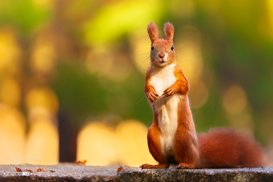 Photograph Hey You…Got Food? by Irene Mei on 500px