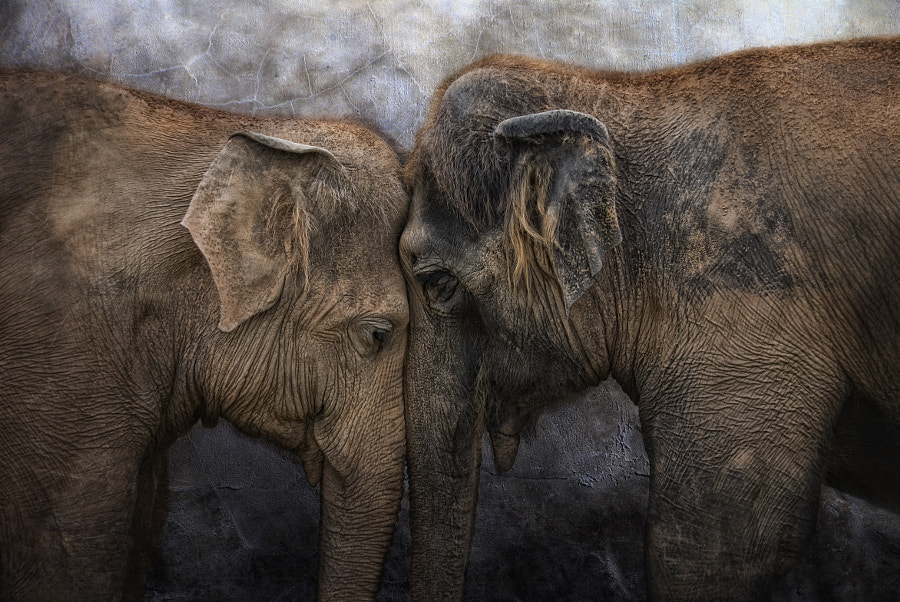 World Elephant Day by Joachim G. Pinkawa on 500px.com