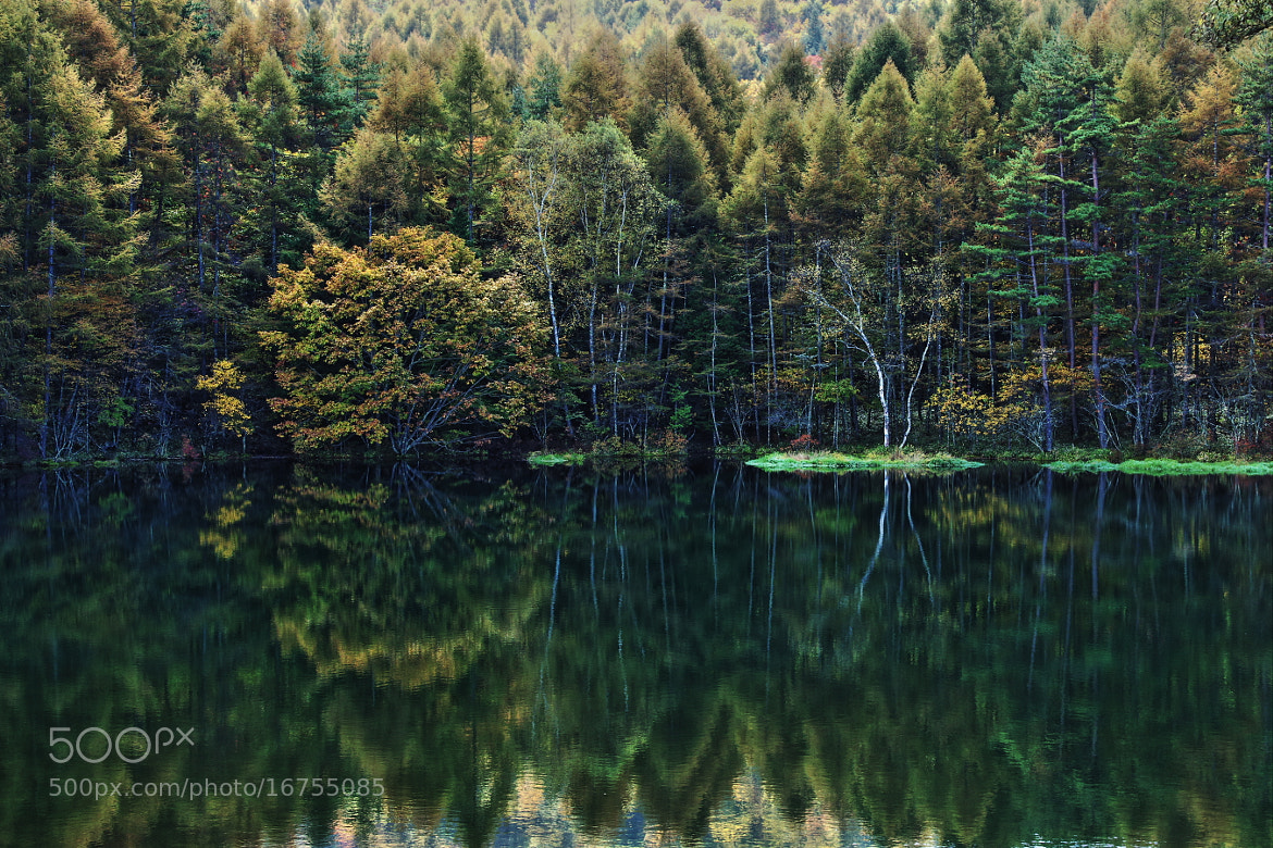 Photograph 秋の装い The fashion of autumn  by TOS1963 on 500px
