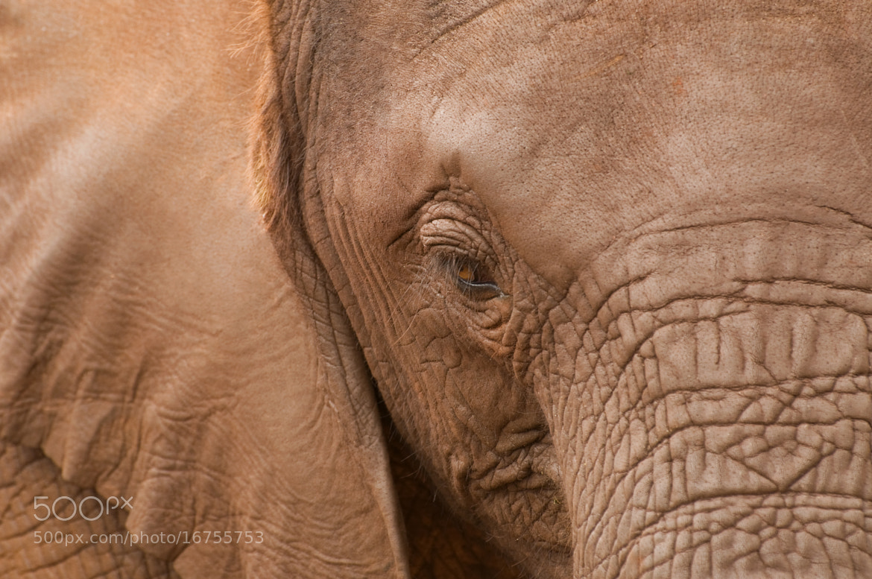 Photograph Elephant by Lisa Mathiasen on 500px