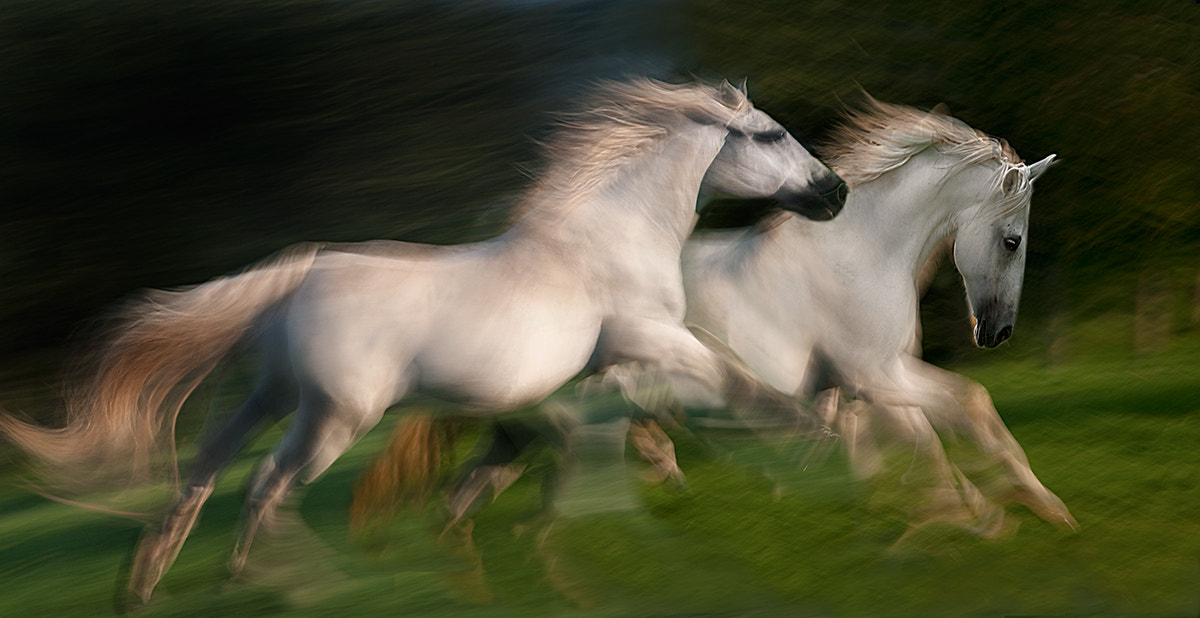 Photograph gallop for two by Milan Malovrh on 500px