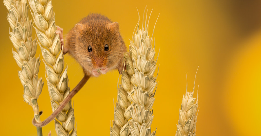 nibbles by Mark Bridger on 500px.com