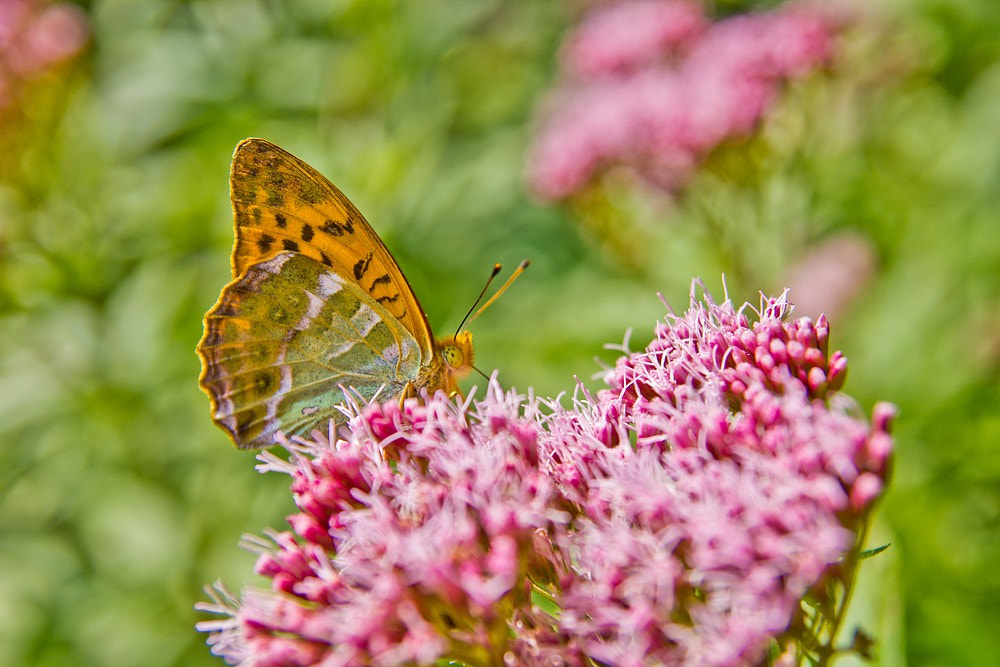 Photograph butterfly by Martin Florian on 500px
