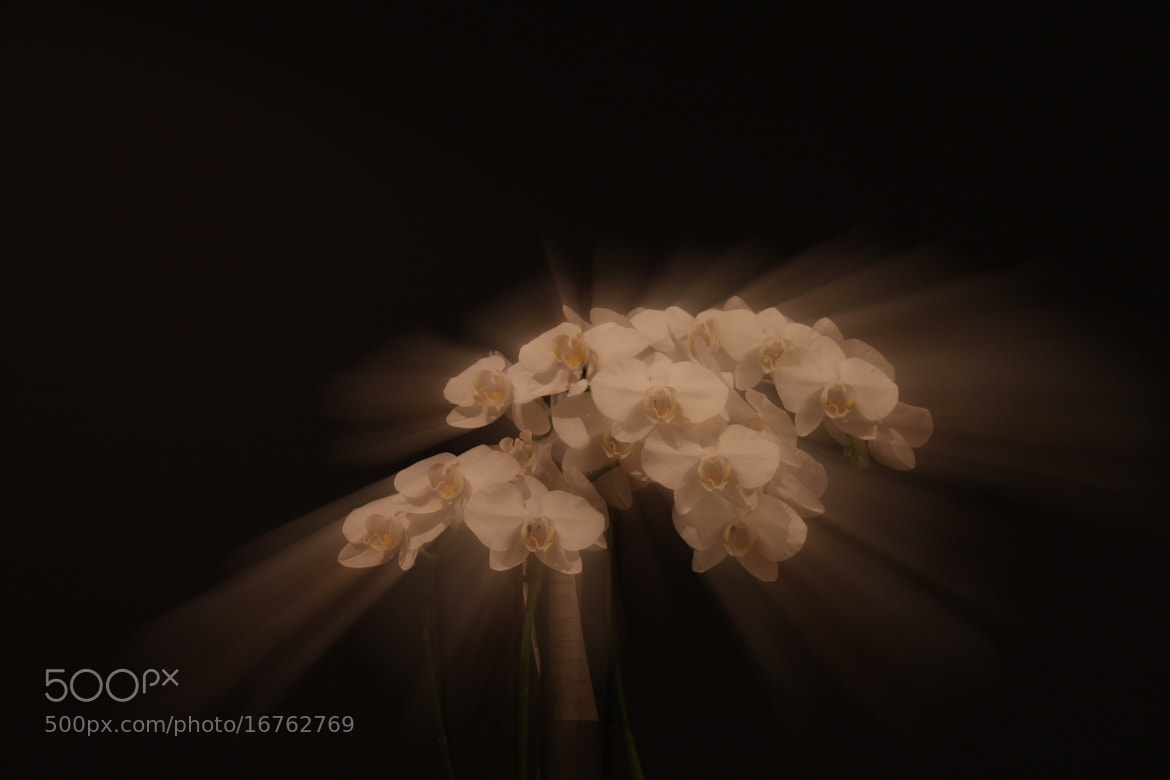 Photograph orchids by Dirk Catsburg on 500px