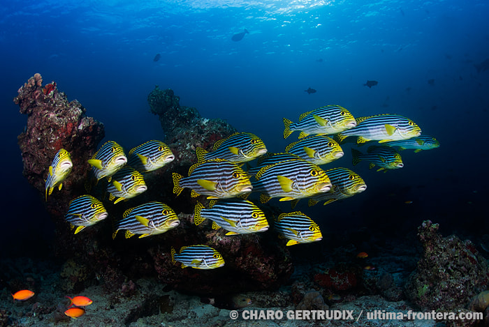 Photograph Sweetlips by Charo Gertrudix on 500px