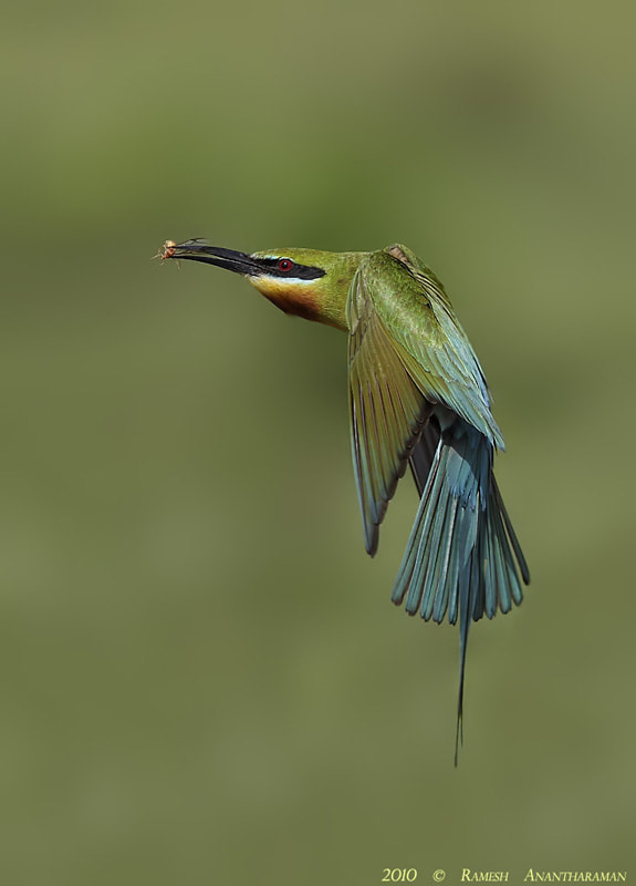 Photograph The Catch by Ramesh Anantharaman on 500px