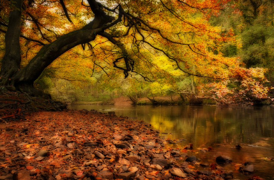 Photograph Nidd Gorge in Autumn by Paul Davis on 500px