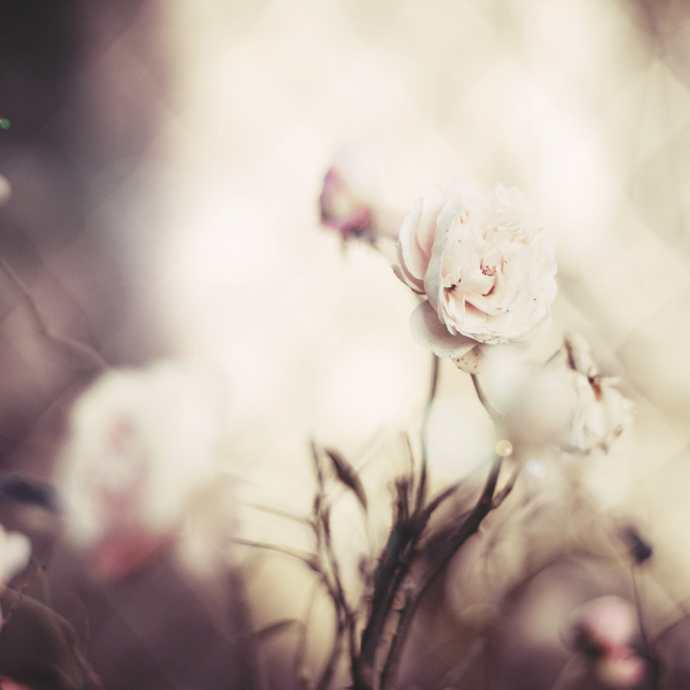 Photograph Kiss me hard before you go, summertime sadness... by Justyna Frąckowiak on 500px