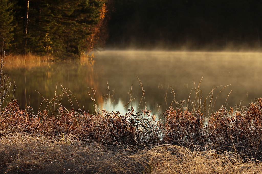 Photograph Untitled by Peter Engman on 500px
