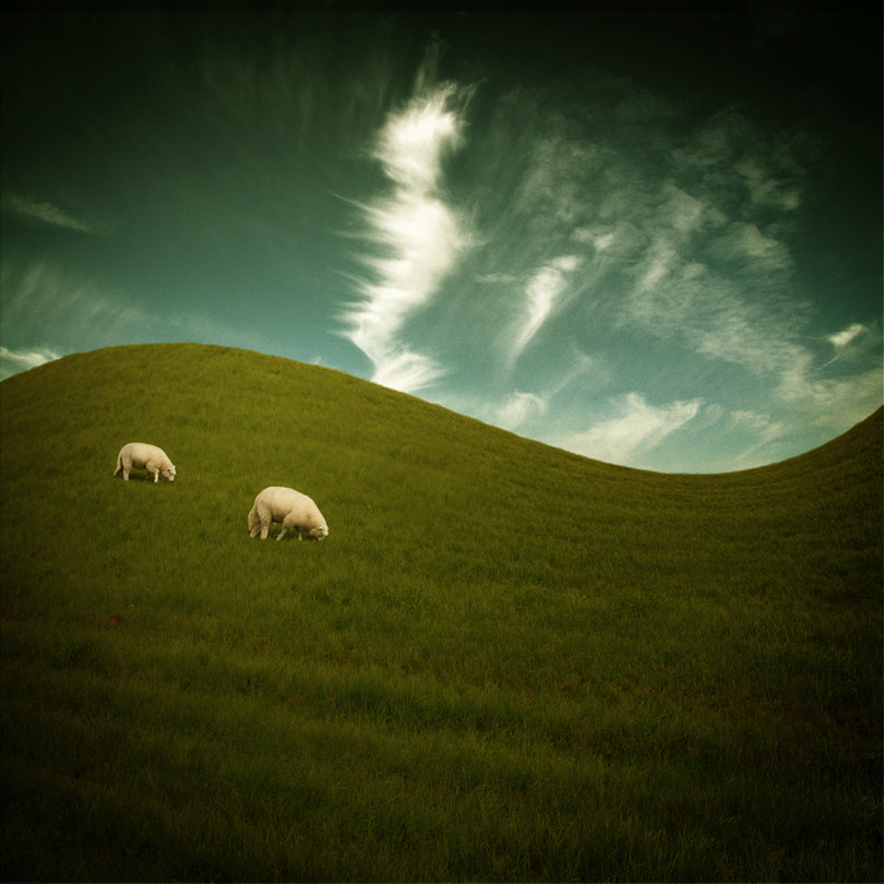 Photograph two sheep by Pixel Passion on 500px