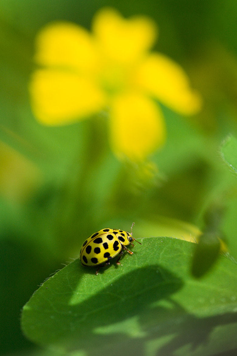 Photograph Giallo e piu' Giallo by Stefano Romanò on 500px