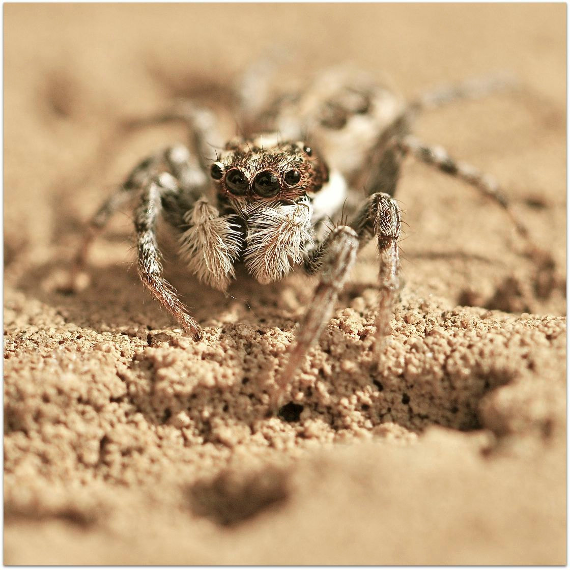 Photograph spider  by Gianluca Nordio on 500px