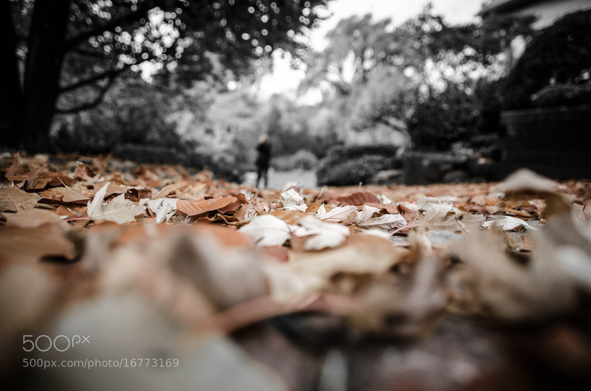 Photograph Fall Leaves by Harsh  Desai on 500px