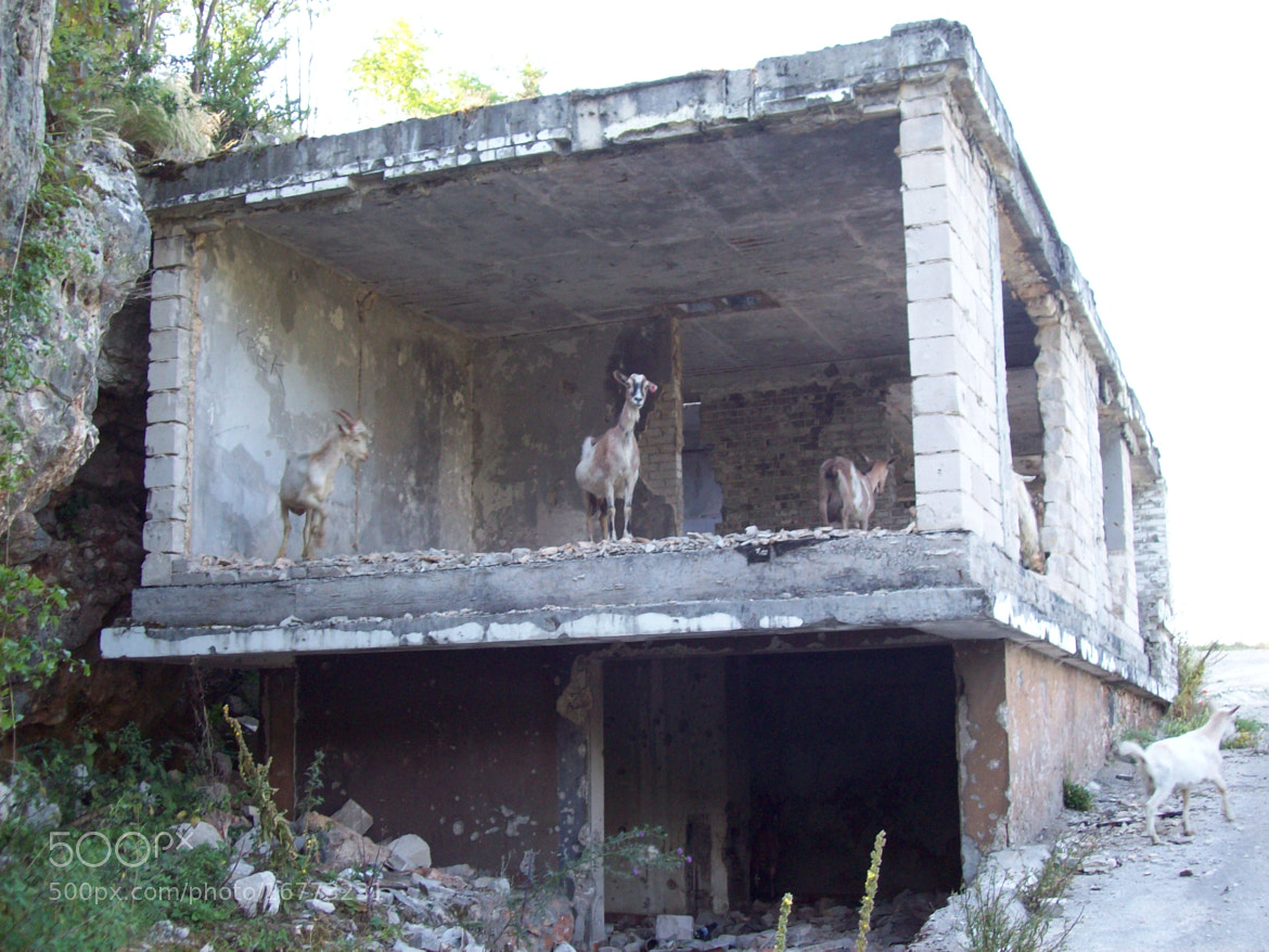 Photograph Goats in an destroyed house by Anton Stark on 500px