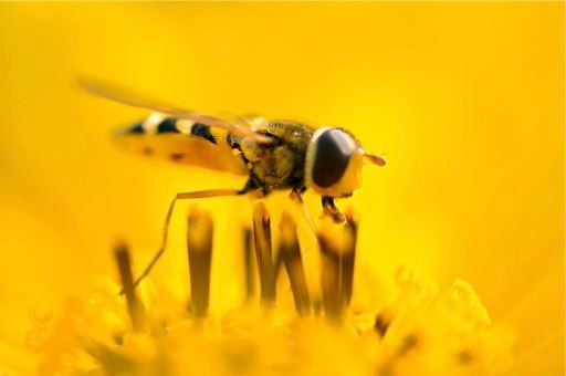 Photograph inside the yellow by Gianluca Nordio on 500px