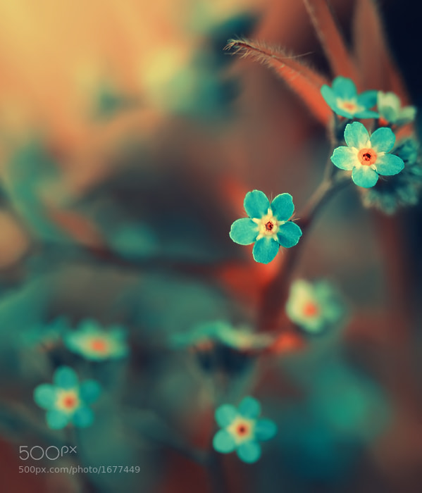 Photograph Moment in Time by Sortvind  on 500px