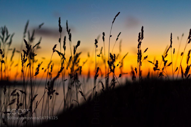 Photograph Hello autumn, hello colors by Daniel Solstrand on 500px