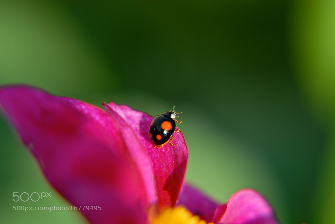 Photograph La Coccinelle by Gilles Royer on 500px