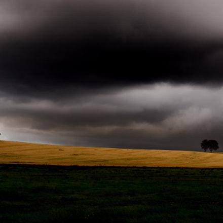 Trees in a Wheat Field
