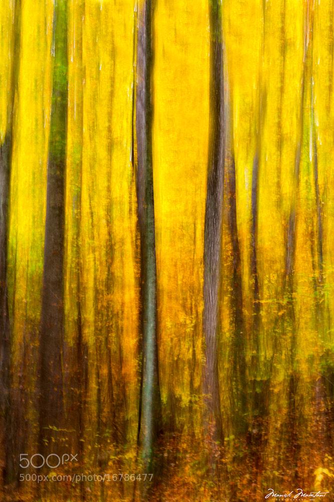 Photograph Fall 2012 by Manish Mamtani on 500px