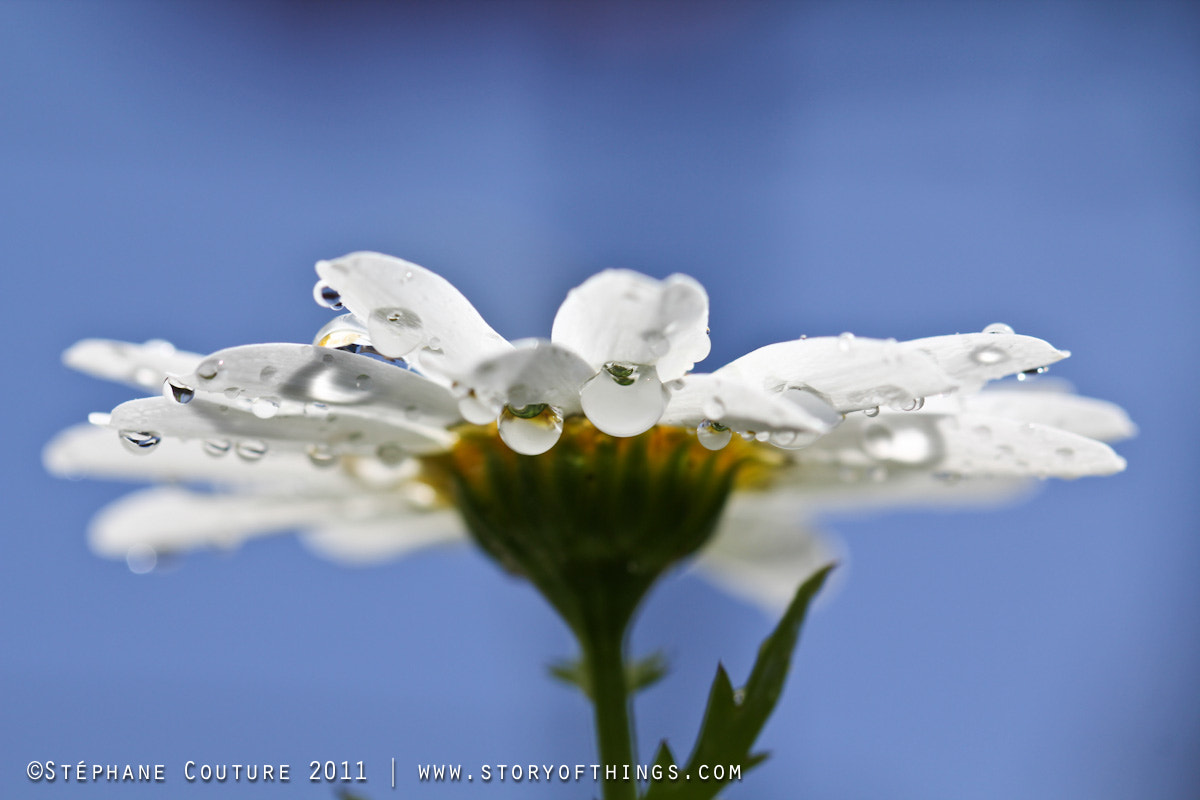 Photograph Blue sky macro by Stephane Couture on 500px