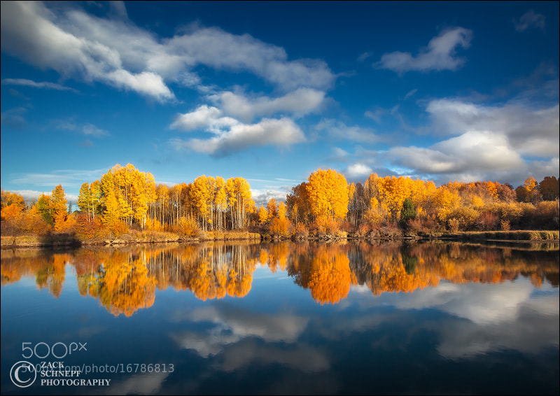 Photograph Gold and Blue 2 by Zack Schnepf on 500px