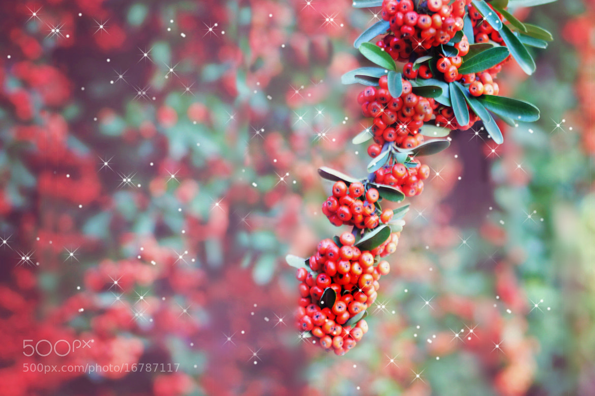 Photograph Fairy Berries by susan spinola on 500px